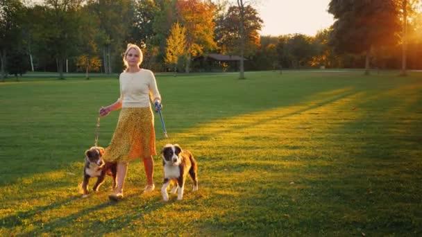 Spokojený majitel dvou ovčáckých psů s jejich domácí zvířata v parku. V malebném prostředí při západu slunce