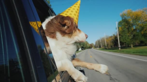 The dog in a festive paper cap looks out of the window of the car. Party with pets