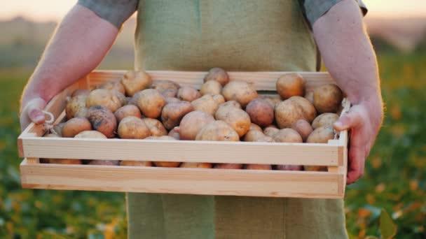 Člověk zemědělec dřevěný box s brambory