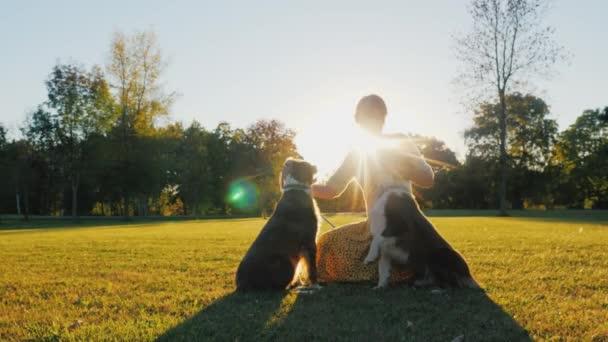 Majitel dvou australský ovčák psů s nimi hrát v parku na slunci