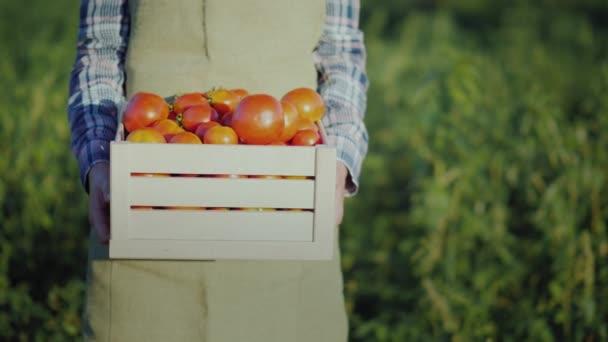 Pracovník má dřevěný box s rajčaty.
