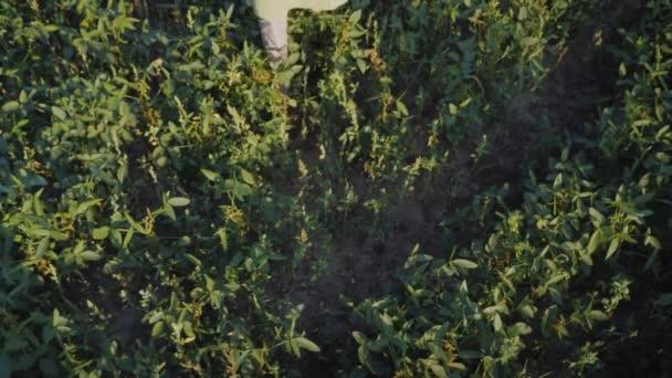 Farmář přináší krabici s čerstvou zeleninou, pohled shora