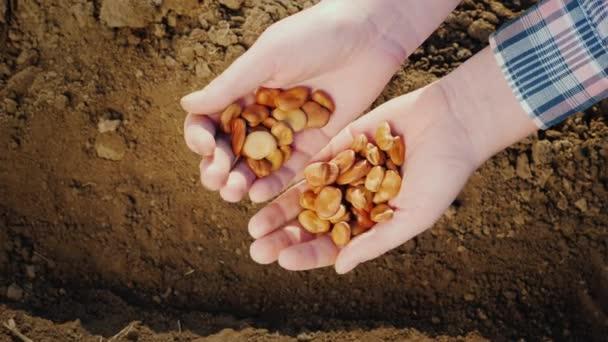 Die Hände der Bauern halten eine Handvoll Hülsenfrüchte über dem Boden. Ökolandbau
