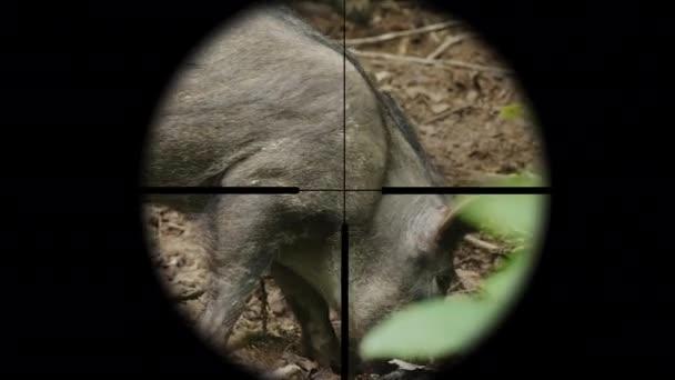 Nézd át a puska optikai látvány egy vadon élő állat az erdőben. A vadász célja a vaddisznó