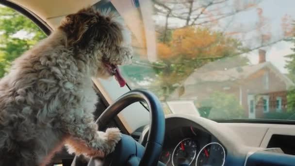 Soustředěný pes, který řídí auto, projíždí americkým předměstí