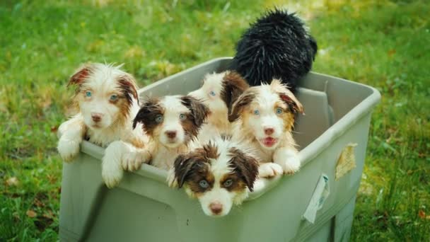 A few funny wet puppies in a basket, looking into the camera