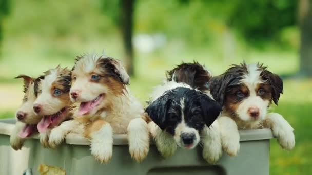 A few funny puppies are taking a bath in a picturesque place.