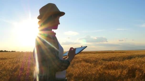 Mladá žena zemědělce v pšeničné pole na slunce pozadí. Dívka používá tabletu, plány na sklizeň. Krouživým pohybem fotoaparátu.