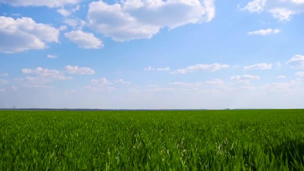 Egy boldog gyermek egy szuperhős jelmez egy piros köpenyt fut át a zöld mezőben balról jobbra, siet a mentő