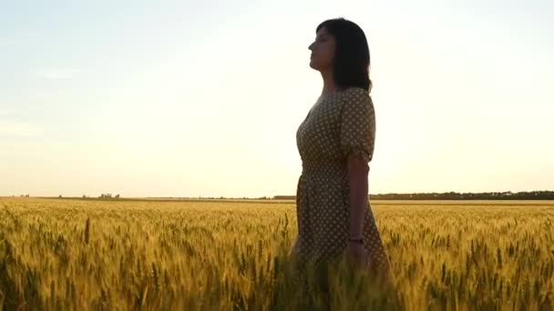 A young girl in a dress walks happily in slow motion over a golden wheat field, touching her ears with her hand, during sunset