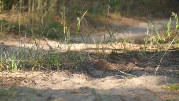 Childs lábak closeup. Fiú cipők fut egy homokos úton. A homokban lévő por repül a kezében.