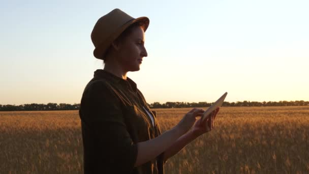 A female farmer inspects a wheat crop for quality using a tablet. Technologies in agriculture. A woman at work.