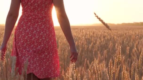 Dívka v červených šatech prochází pšeničným polem. Zavřít.