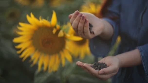Mladá krásná žena zemědělce s červenými vlasy drží slunečnicová semínka a stojí v oblasti s slunečnice ve večerních hodinách při západu slunce. zemědělství, sklizeň.