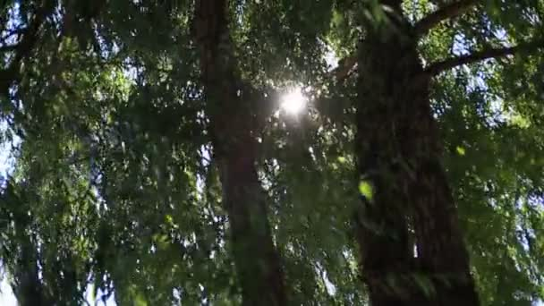 the sun shines through the green leaves of the trees.
