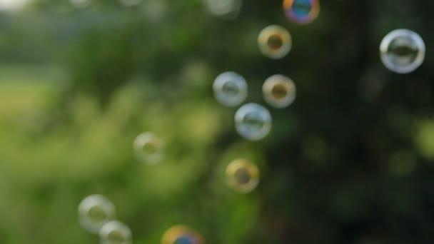 mýdlové bubliny v létě odlétají ze stromů v lese