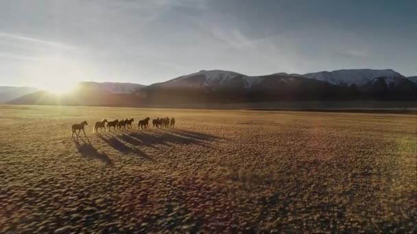 Horses running free in meadow with snow capped mountain backdrop