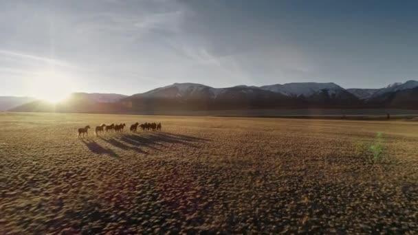 Koně volně v louce se sněhem limitován horského pozadí