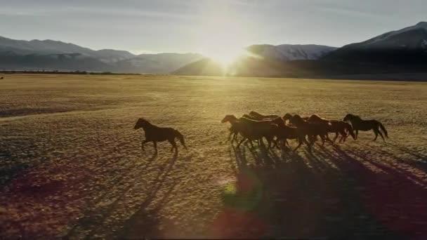 Pferde laufen frei auf der Wiese mit schneebedeckter Bergkulisse