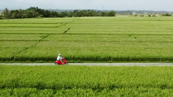 Řidič motocyklu jede na rýžových polích. Venkovní záběr, Venkovská krajina. Cestování a sportovní fotografie. Koncepce rychlosti a svobody.