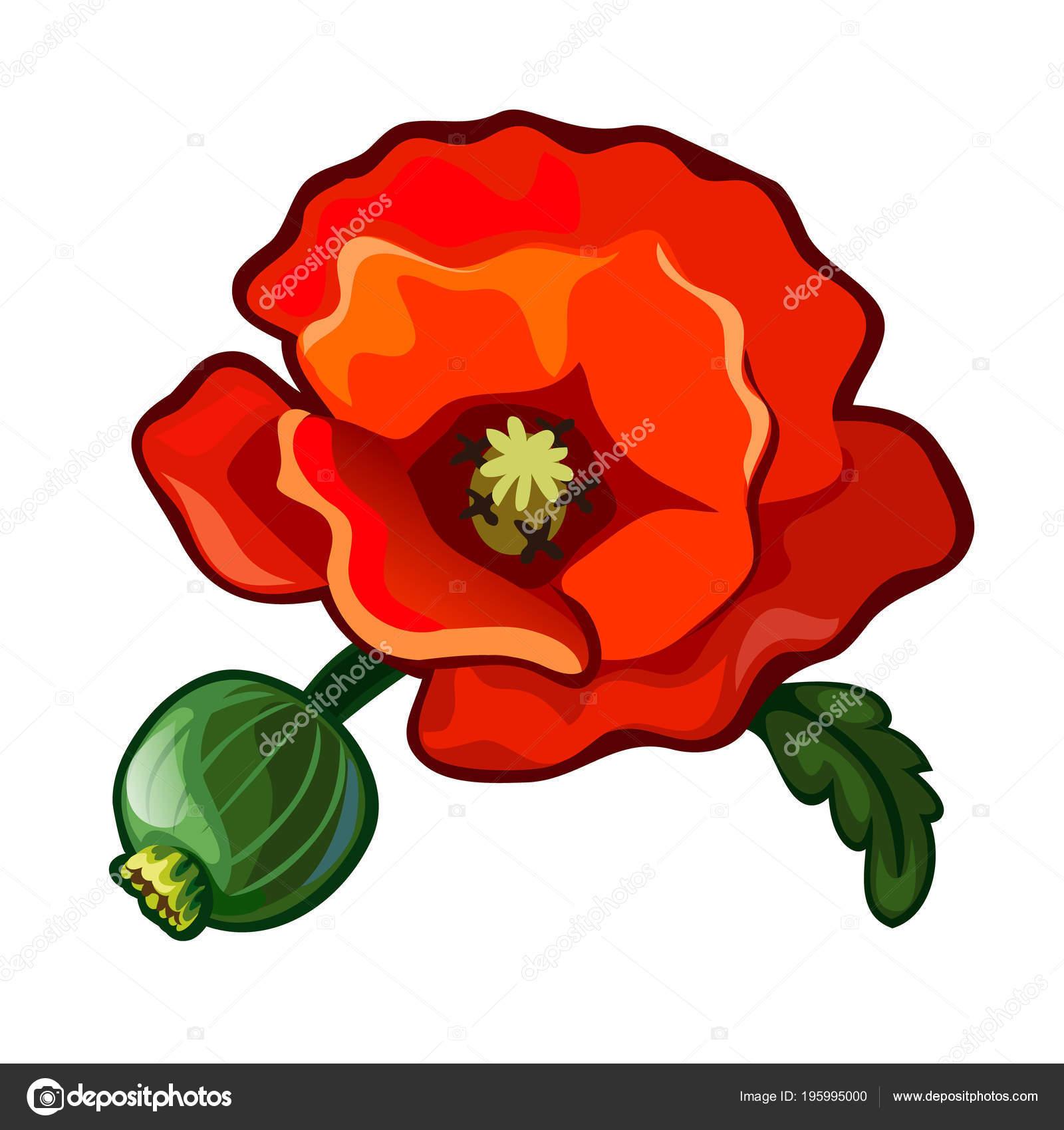 Poppy Flower Beautiful Red Plant Grass Wildlife Image In Cartoon