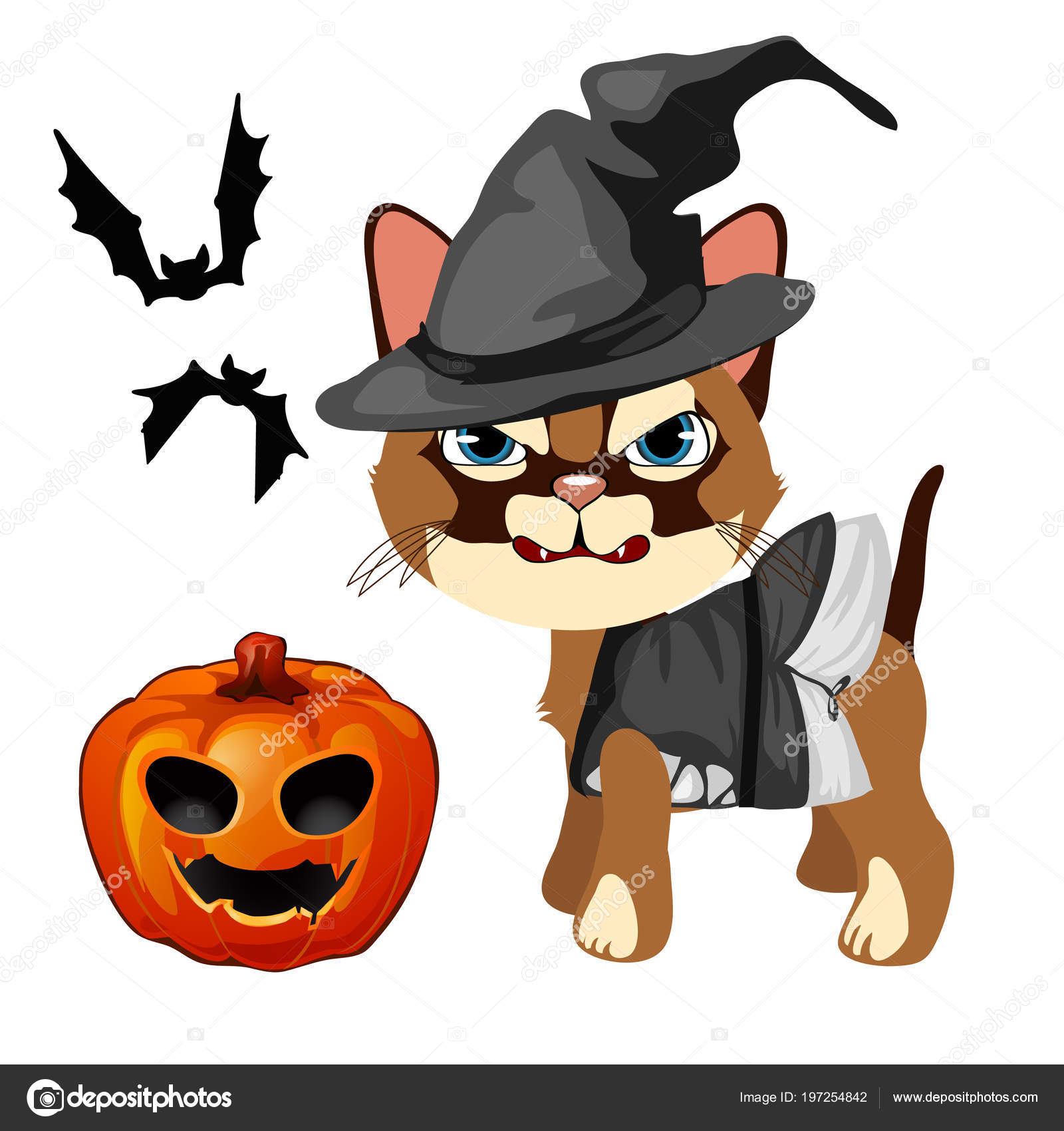 Angry cat in the hat witch bares his sharp teeth  Pumpkin