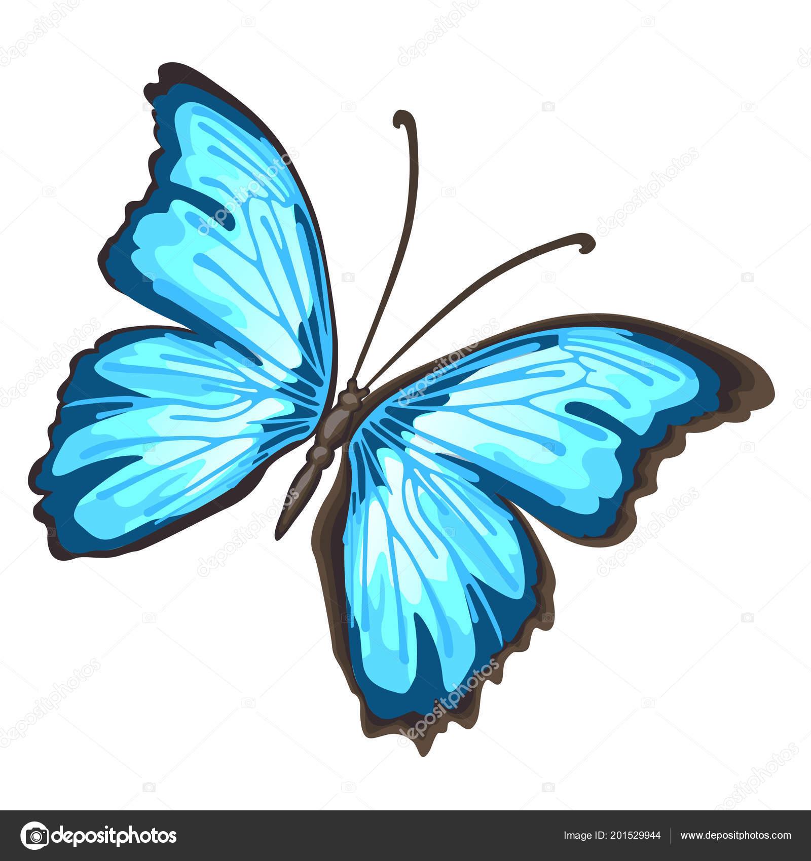 Aile De Papillon Dessin papillon dessin animé avec des ailes bleues isolé sur fond blanc