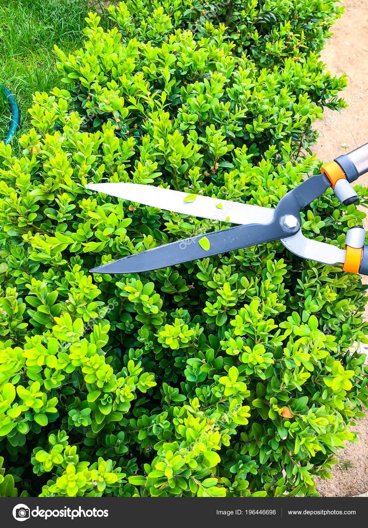Entretien de jardin, élagage des branches, à la main avec l\'outil de ...