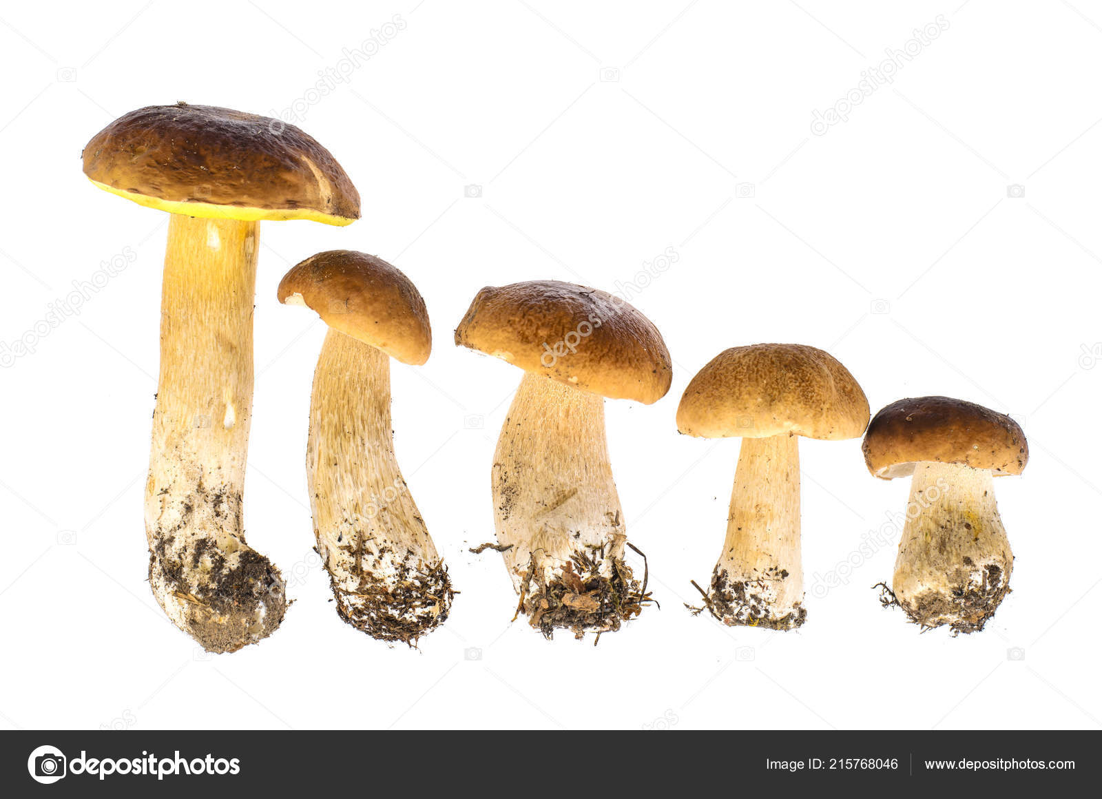 8x12 FT Mushroom Vinyl Photography Backdrop,Colorful Fungi Pattern BER Boletus Sketch Style Plants Autumn Illustration Background for Party Home Decor Outdoorsy Theme Shoot Props