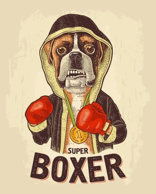 Dog boxer dressed in human in robe, gloves. Vintage black engraving