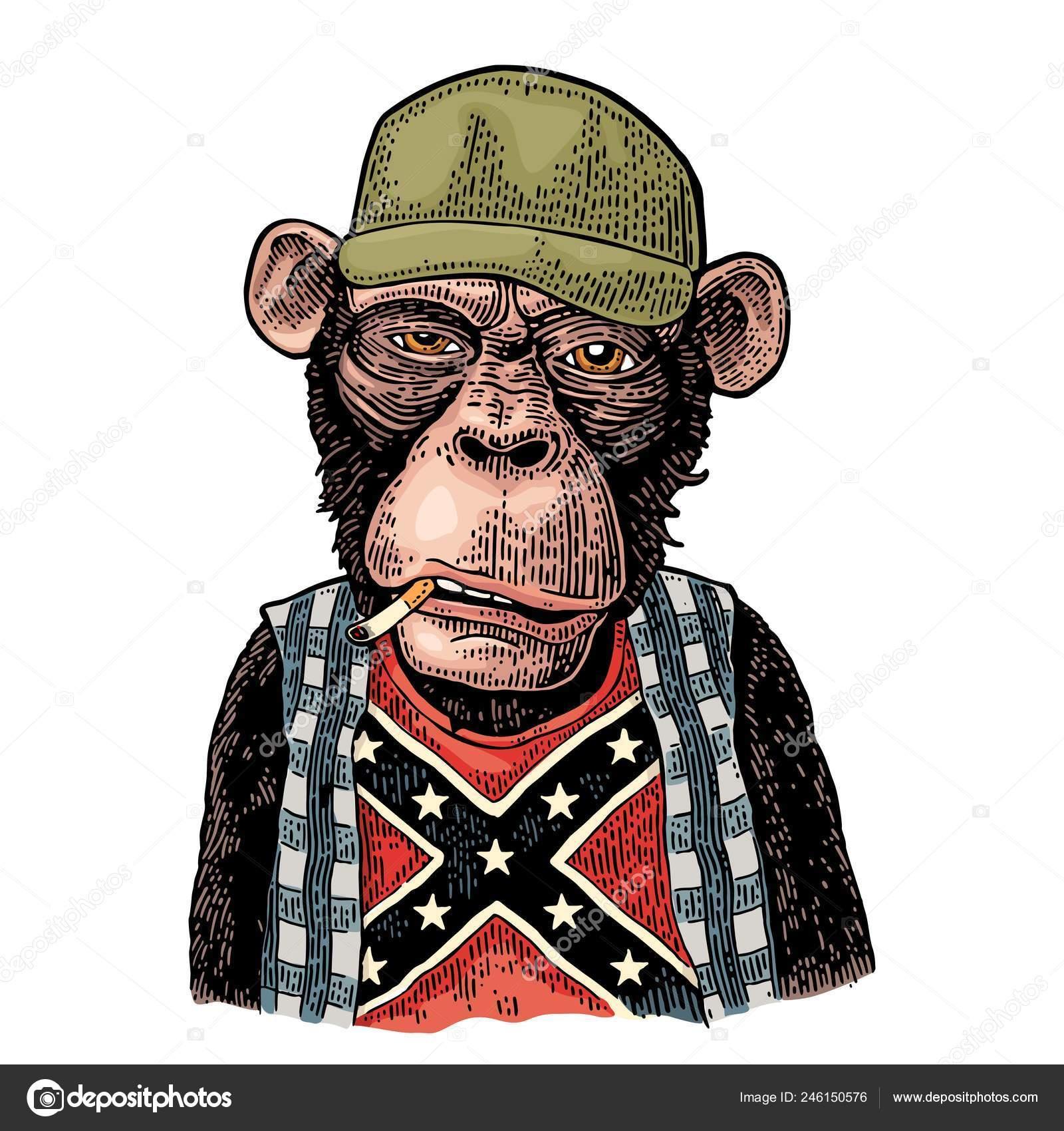 9544711401b5a Caipira de macaco no boné de caminhoneiro