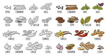 Set spices. Vintage vector engraved illustration isolated on white