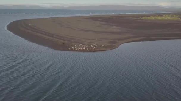 Légi. Tömítések, pihenés a tengerparton. Seal az óceánban. Izland