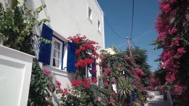 Vítr hraje s fialový květ růžový keř na terase tradiční Bílý dům s modré okenice na ostrově Ios, Řecko.