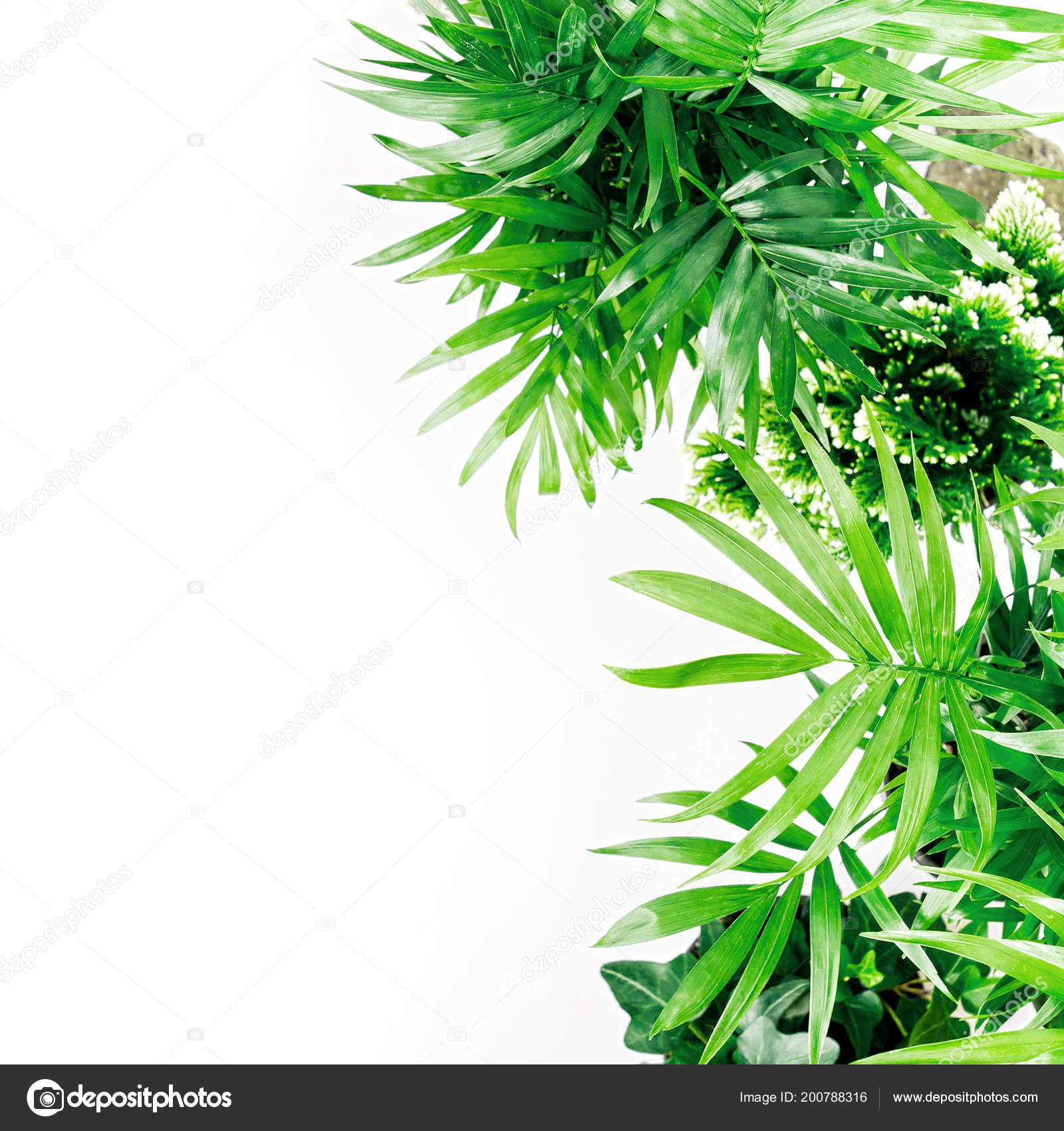 Tropical Leaves Plants White Background Space Text Top View Flat Stock Photo