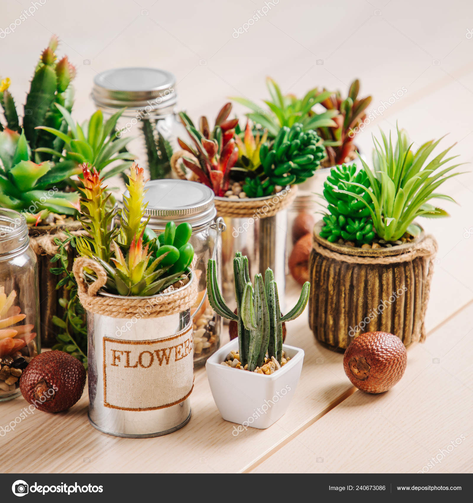 Photos Types Of Cactus House Plants Various Types Cacti Succulents House Plants Pots Wooden Table Stock Photo C Igishevamaria 240673086