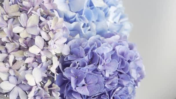 Gyönyörű csokor kék és lila Hydrangeas