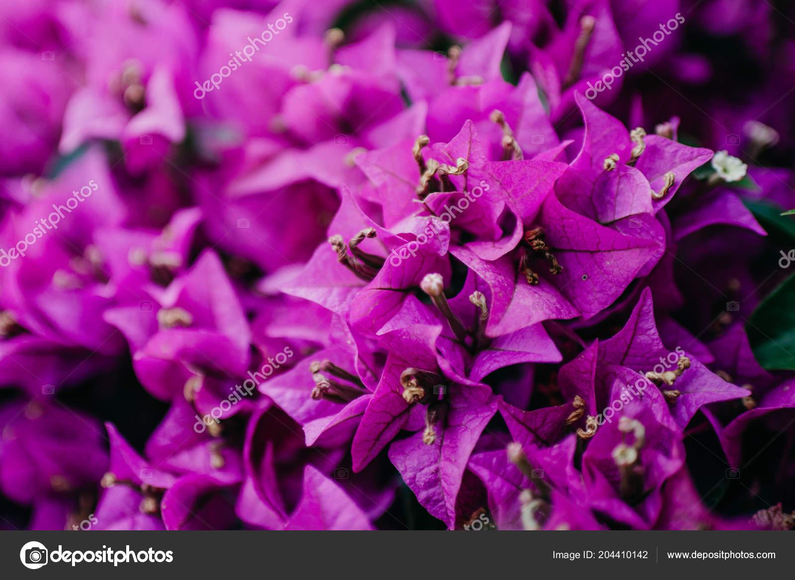 Lot Little Purple Flowers Spain Stock Photo Minchanin 204410142