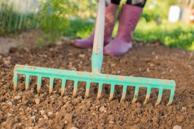 Women Farmer Working In Garden With Rake Leveling Ground. Preparation Of Ground For Planting. Work In Garden With Rake.