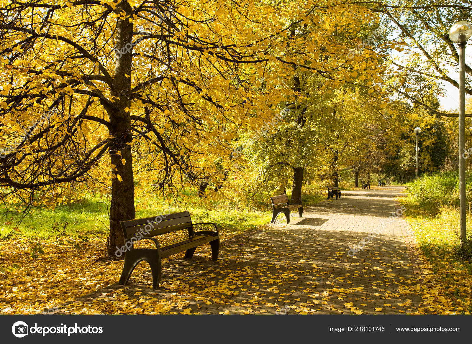 Beautiful Scenic Autumn Landscape Wooden Benches Trees