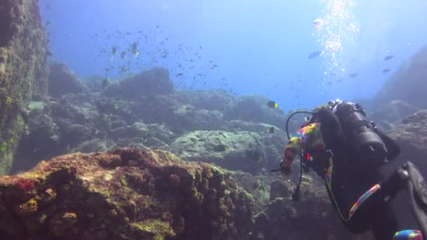 Mexico. Fascinating underwater diving in the sea of Cortez.
