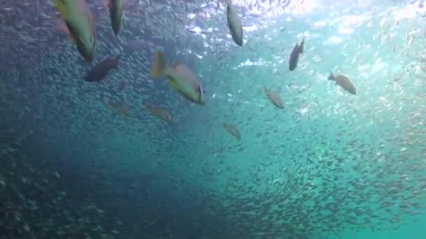 Mexiko. Fascinující podmořské potápění v moři Cortez.