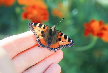 bright orange butterfly sits on the fingers of a man's hand and is going to fly to the heights