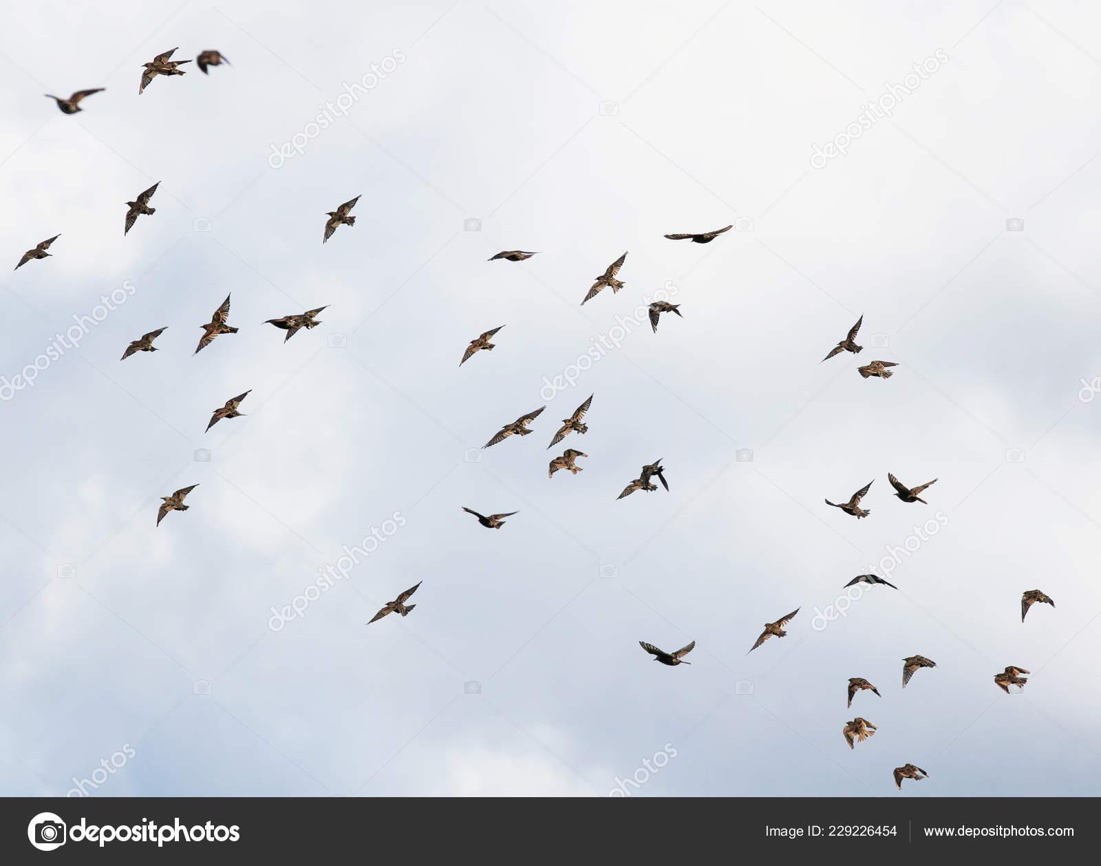 Εικόνες από ένα μεγάλο μαύρο πουλί