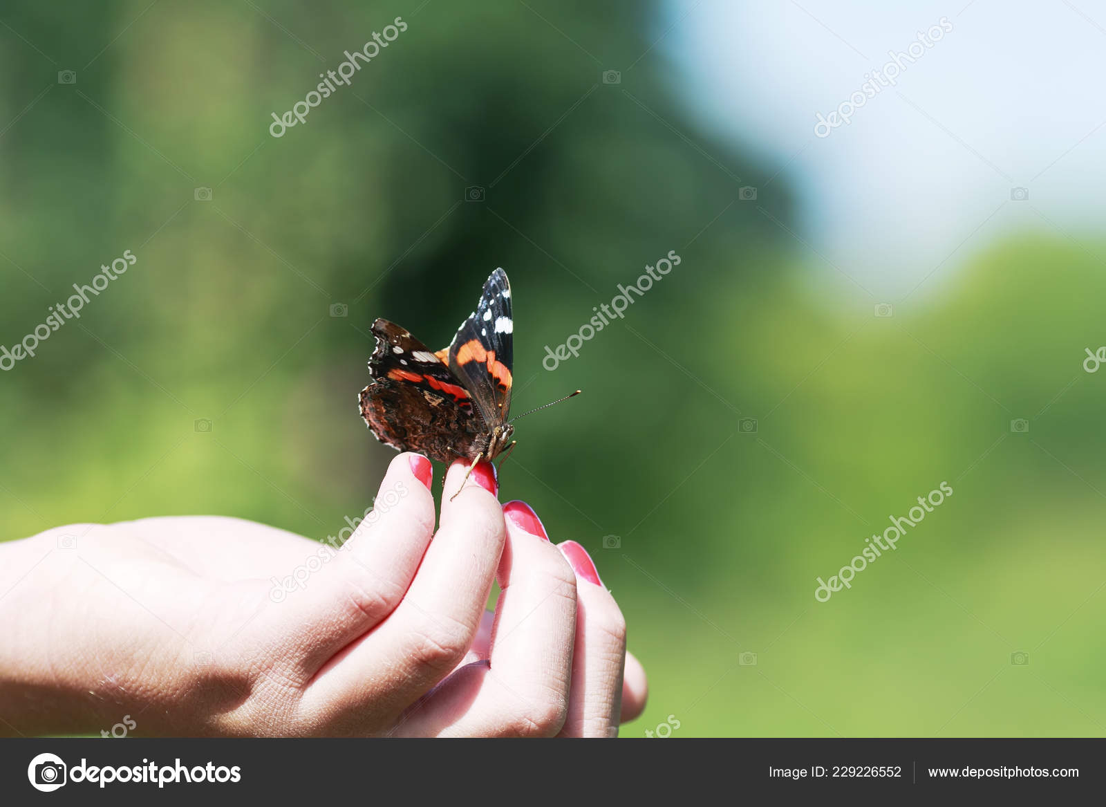 ec397fb80 Beautiful butterfly Admiral crawling on fingers girl in spring Park about  to fly away — Photo by nataba16