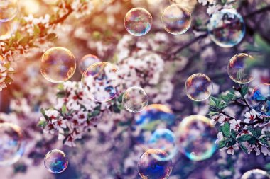festive beautiful background with flying bubbles shimmering in the sun in the spring Sunny garden above the cherry blossom branch