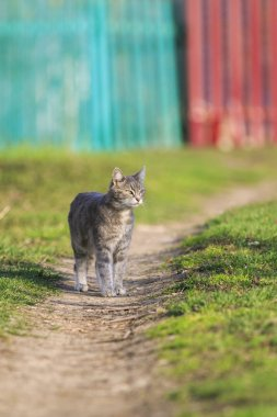 cute cat walking on a Sunny green meadow