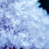 Priorità bassa di neve naturale da molti cristalli dei fiocchi di neve di varie forme e texture shimmer al sole in una giornata invernale chiaro