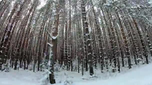 Akční jízda kolem lesa. POV pohledu jízdy, pohled z uvnitř vozu vysoká hora Les borovic v zimě