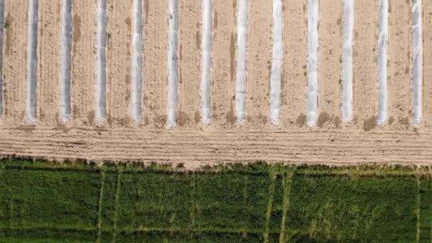 Antény. Sojový pole zrání v jarní sezóně, zemědělská krajina